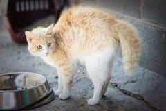 Frightened cat Stock Photo