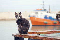 Frightened cat. On the background of the ship Stock Photo