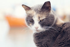 Frightened cat. On the background of the ship Royalty Free Stock Images