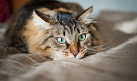Frightened cat Royalty Free Stock Images