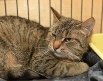 Frightened cat Royalty Free Stock Photo