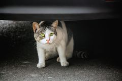Frightened cat on a pavement under the car bumper. Close view stock images