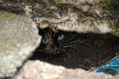Frightened cat peeking out Royalty Free Stock Images