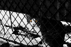 Frightened cat standing behind fence Stock Images
