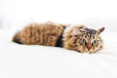 Frightened cat Stock Image