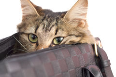 Frightened cute kitten hiding in a bag Stock Images