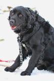 Frightened dog Royalty Free Stock Image
