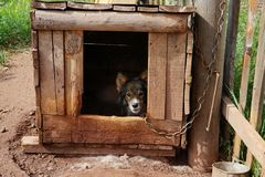 A frightened doggie is hiding in a wooden kennel. Rural life. A frightened doggie is hiding in a wooden kennel Stock Photo