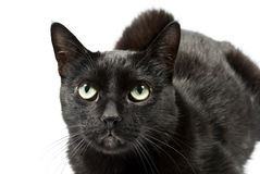 Frightened eyes of a black cat Royalty Free Stock Photo