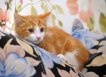Frightened ginger kitten Royalty Free Stock Photos