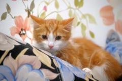 Frightened ginger kitten Stock Photos