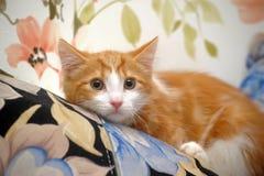 Frightened ginger kitten Royalty Free Stock Image