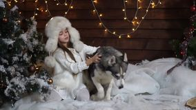 Frightened girl sitting under the tree and trying to keep the Huskies dog. Frightened girl sitting under the Christmas tree in the background of a wooden house stock video