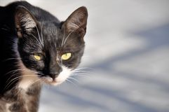 Frightened homeless cat on an abstract background Royalty Free Stock Photos