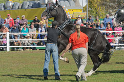 Free Frightened Horse At Country Fair Royalty Free Stock Image - 34400866