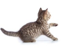 Frightened kitten cat rear or back view Stock Photography