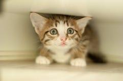 Frightened kitten hiding. Pet - frightened cute kitten hiding Royalty Free Stock Photography
