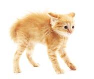 Frightened kitten. Royalty Free Stock Photography
