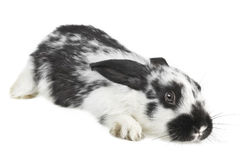 Frightened little baby rabbit Stock Photos
