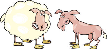 Frightened sheep and shaved one royalty free illustration
