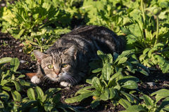 Frightened tabby cat Royalty Free Stock Photo