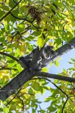 Frightened young cat sitting on tree, can`t go down Stock Images