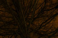 Frightening Fir Tree in front of Orange Night Sky. Scary, frightening and mysterious looking fir tree in front of orange night sky at night time stock photos