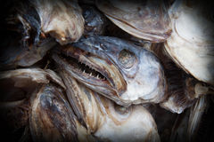 Frightening fish heads  of cod Royalty Free Stock Photography