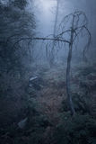 Frightening foggy forest Stock Photo