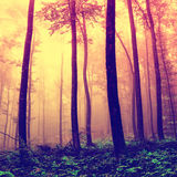 Frightening forest trees background Royalty Free Stock Image