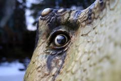 Terrible eye reptile, dinosaur. A frightening look of a scared dinosaur from an ethnic park royalty free stock photography