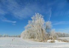 Frigida temperaturer och ny snö för snowmobilers royaltyfria foton