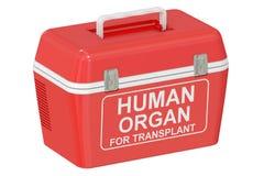 Frigorifero portatile per il trasporto degli organi erogatori, rappresentazione 3D illustrazione di stock