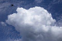 Frihet av flyget i en klar himmel royaltyfri fotografi