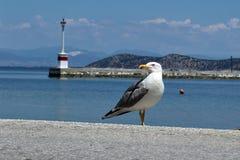 Frihet för Seagull` s Arkivfoto