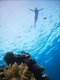 frihet som snorkeling Royaltyfri Fotografi