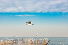 Frihetsbegrepp, vit seagull som skjuta i höjden i den blåa himlen i Miami Royaltyfri Bild