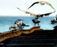 frihetsförälskelse mottar taken skallr dig royaltyfri fotografi