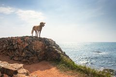 Frihetshund Hundstaget på vaggar och ha gyckel på havet, havet royaltyfri foto