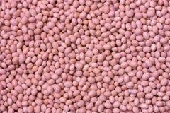 frijoles ροζ Στοκ φωτογραφία με δικαίωμα ελεύθερης χρήσης