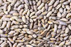 Frijoles Stock Images
