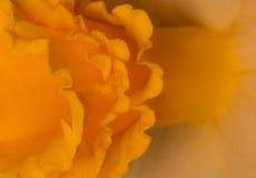 Frilly kolor żółty Zdjęcie Stock