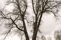 Frilufts- träd arkivfoto