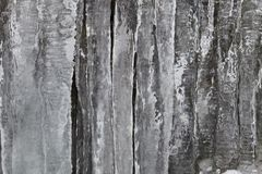 Fringe of ice Royalty Free Stock Image