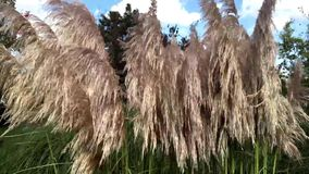 Fringed floating in the wind. Fringed herbs floating in the wind stock video