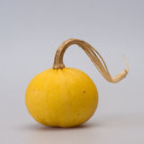 A fringed pumpkins Stock Photo