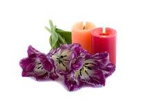 Fringed tulip and burning candles. Fringed tulip on a white background Royalty Free Stock Photo