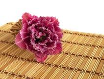 Fringed tulip. Terry fringed tulip on a bamboo napkin Royalty Free Stock Images