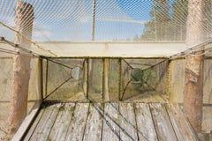Fringilla - bird catching and ringing ornithological station Stock Image