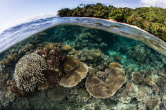 Fringing Coral Reef in Fiji Royalty Free Stock Image